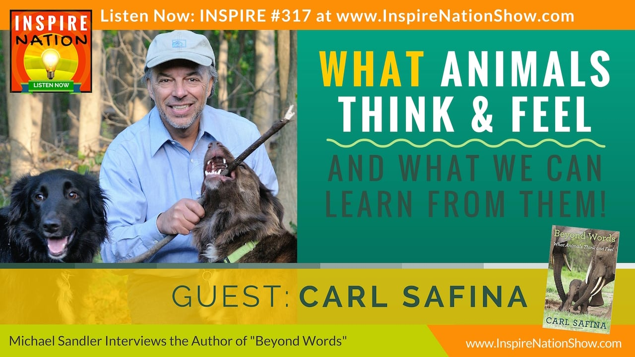 "Listen to Michael Sandler's interview with Carl Safina on ""Beyond Words"" and what animals think & feel."